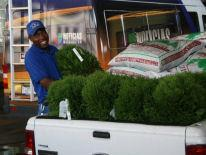 Smiling BID worker unloading green shrubs from a pickup truck